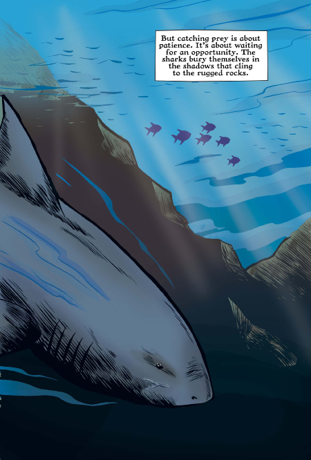 Xoc: The Journey of a Great White preview page 4